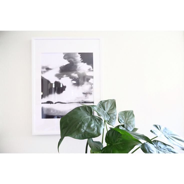 P R I N T S   We have loads of amazing  prints from both Australian & New Zealand artists, support local now!  SHOP   www.daisychainstore.com.au