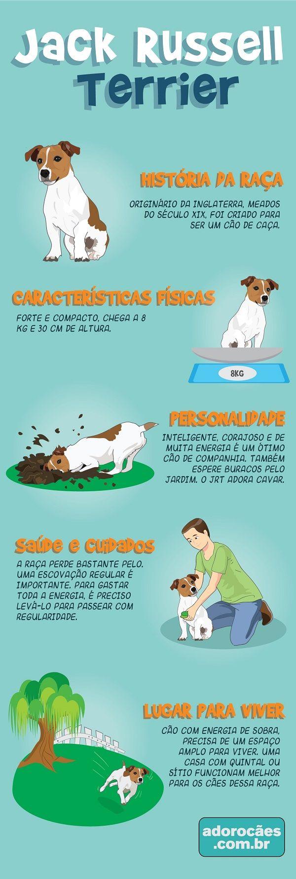 Jack Russell Terrier: história da raça, características físicas, personalidade, temperamento, saúde e cuidados, lugar para viver