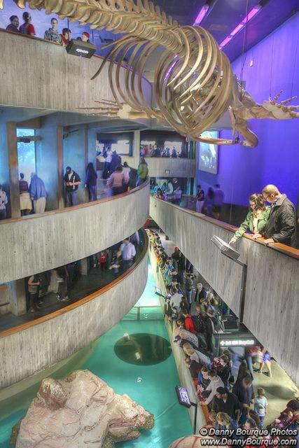 New England Aquarium in Boston. Love that place!