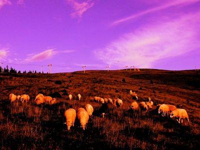 Field of Dreams - Romania  In the romanian countryside