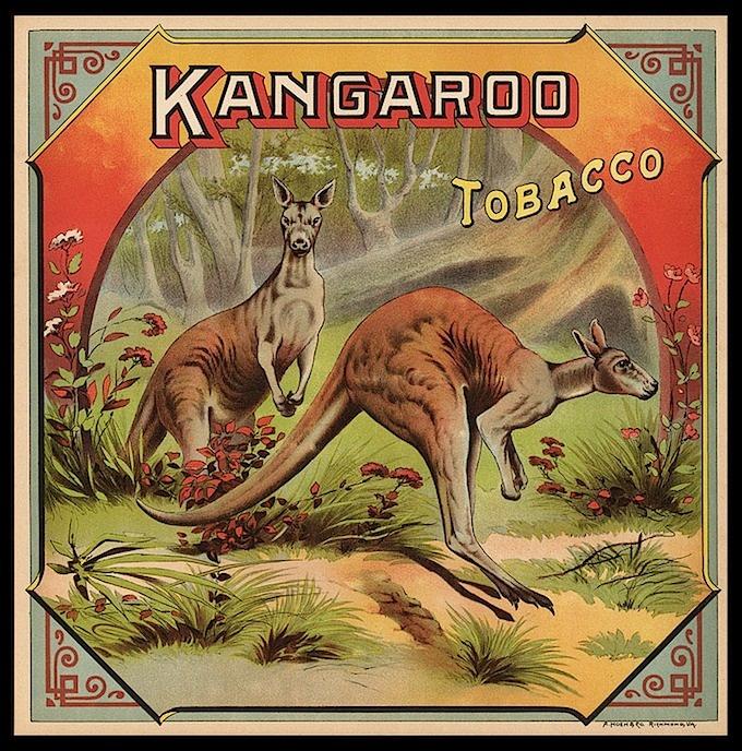 C. 1900 Kangaroo Tobacco label