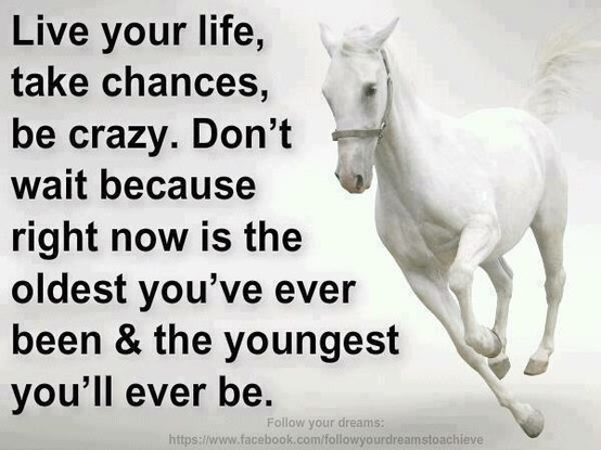 Life quote with horse theme | My love for: Horses ...