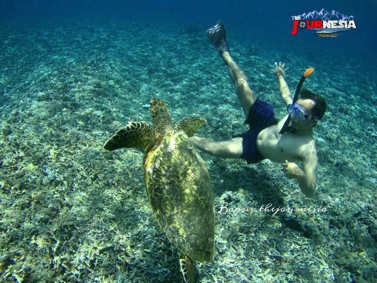 Playing with turtle in Gili Trawangan, Lombok.
