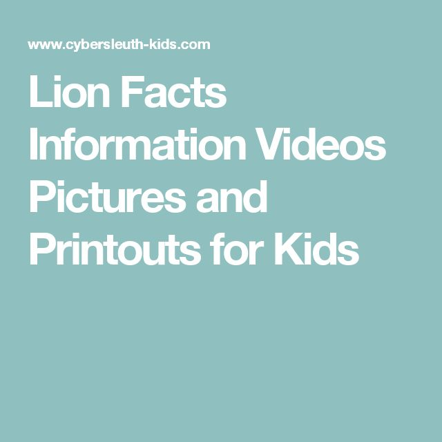Lion Facts Information Videos Pictures and Printouts for Kids