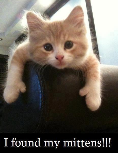 I found my mittens!