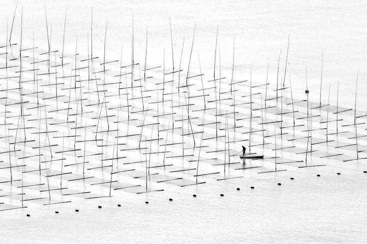 Le foto finaliste ai Sony World Photography Awards - Il Post Open - Viaggi Coltivare il mare Un pescatore coltiva nel mare tra le canne di bambù costruite per l'acquacoltura al largo della costa, nel sud della Cina (©Tugo Cheng, Hong Kong, Shortlist, Open, Travel, 2016 Sony World Photography Awards)