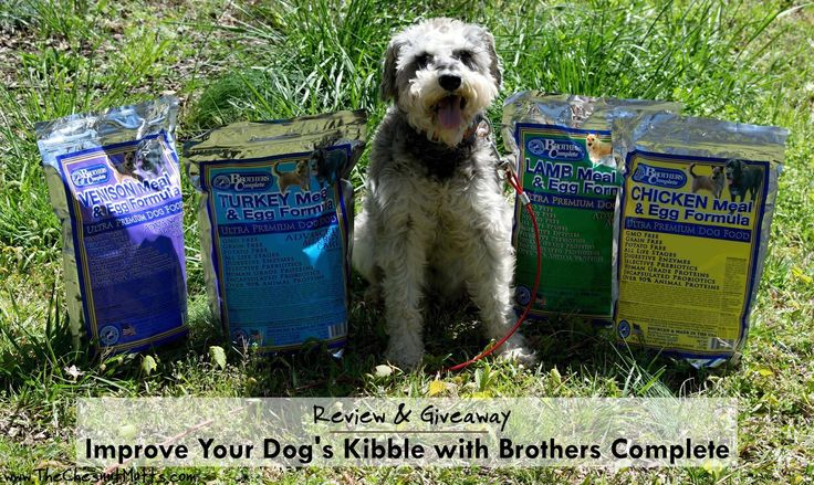 What The Best Food To Giv To Your Dog