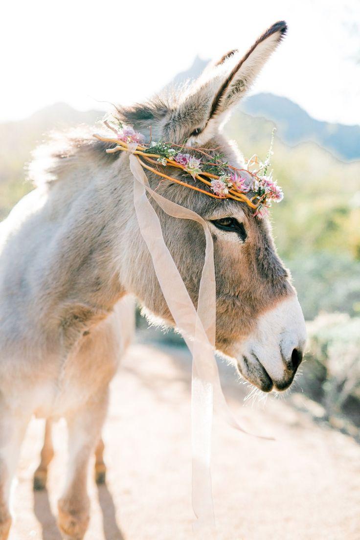 Hochzeitsinspiration von Ashley Rae Photography in Arizona   – Tiere & Freunde