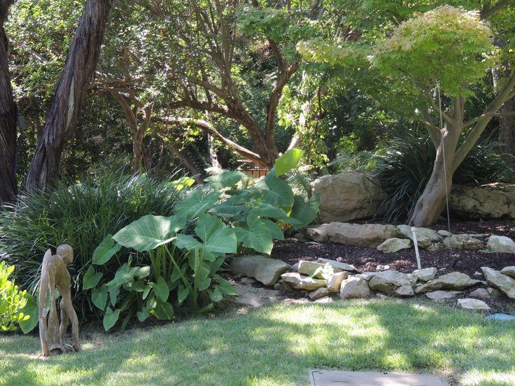 24 Best Zilker Botanical Gardens Images On Pinterest Botanical Gardens Austin Tx And Japanese