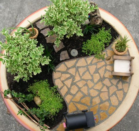 Indoor Miniature Garden, its so cute...something creative to do with tiny plants for inside during the long winter.....