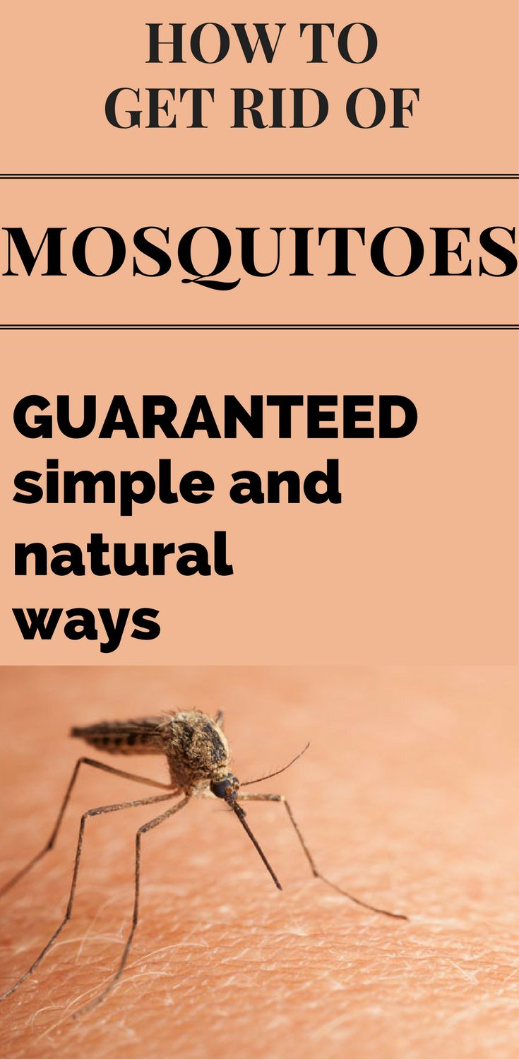 How to get rid of mosquitoes guaranteed simple and Ways to get rid of mosquitoes in your house