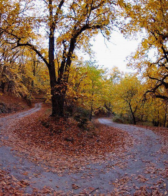 Autumn colors.. Parnona mountain, Arcadia, Greece
