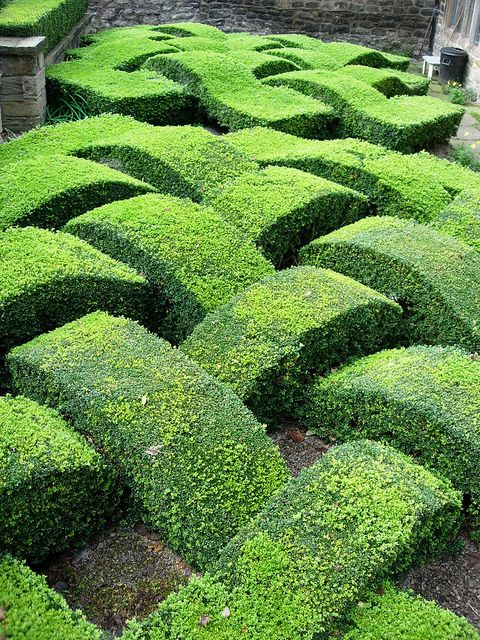 29 Best Hedges Images On Pinterest