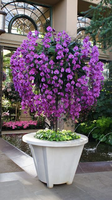 Glorious orchid tree! OMG!! I want THIS in my house!! Orchids Heaven!!! :)
