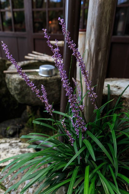 晩夏・宝泉院のお庭 : 花景色-K.W.C. PhotoBlog