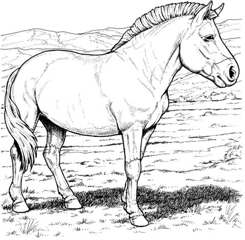 Przewalskis Wild Horse Coloring Page From Horses Category Select 27278 Printable Crafts Of Cartoons Nature Animals Bible And Many More