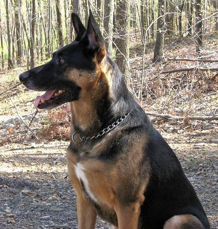 Breed Dog Description