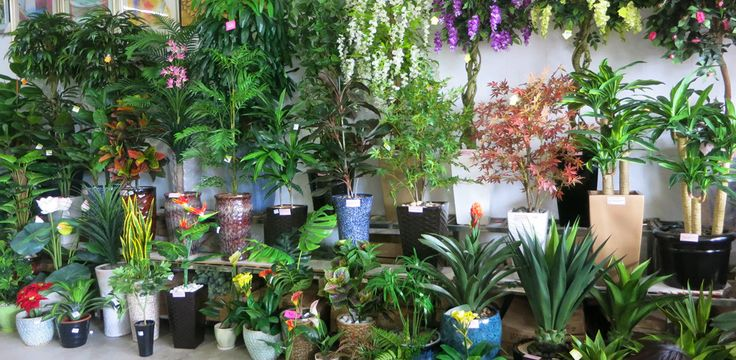 Perth's leading importer & supplier of high quality artificial plants, trees, shrubs & silk flowers. Delivery Australia wide.