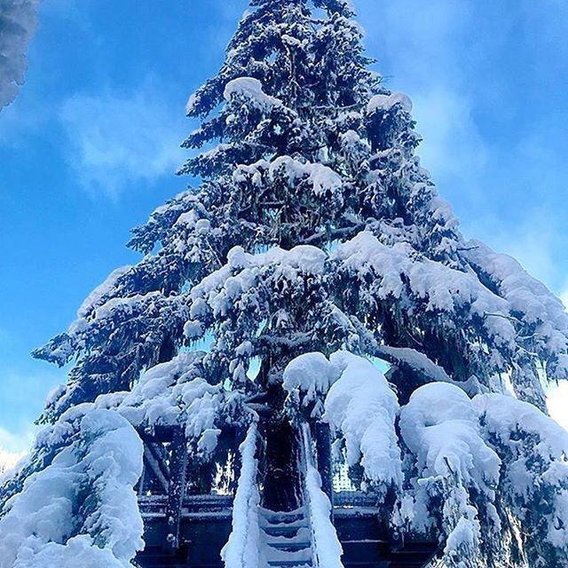 Big Doug looking all pretty against the blue sky yesterday.   #ZiptrekLife from @kingfisherblueproductions  .  .  .  #explorebc #onlyinwhistler #whistler #winterwonderland #ecotour #pnw #neature
