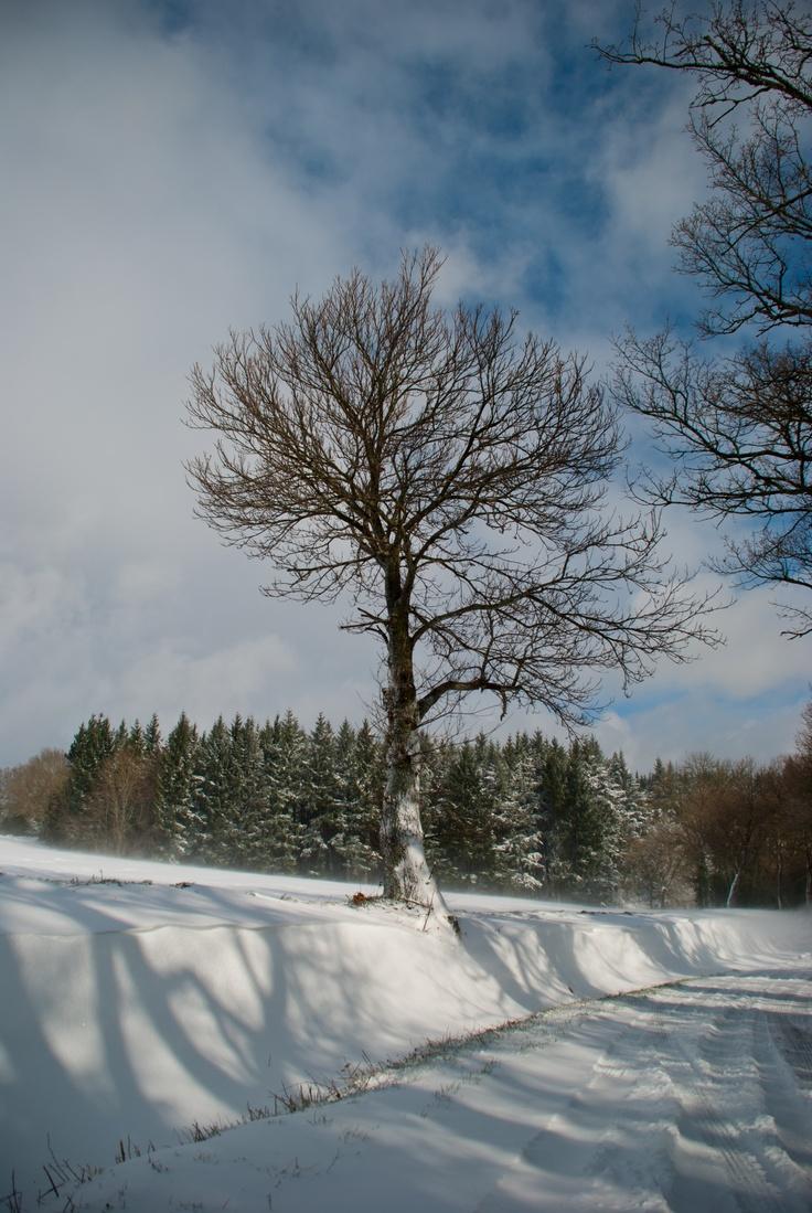 Fontiers-Cabardés - Janvier 2013