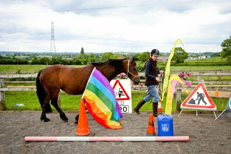 Horse Agility. By Kate Lee.  Fancy giving something new a try this summer? Click on the picture for the rest of the article!