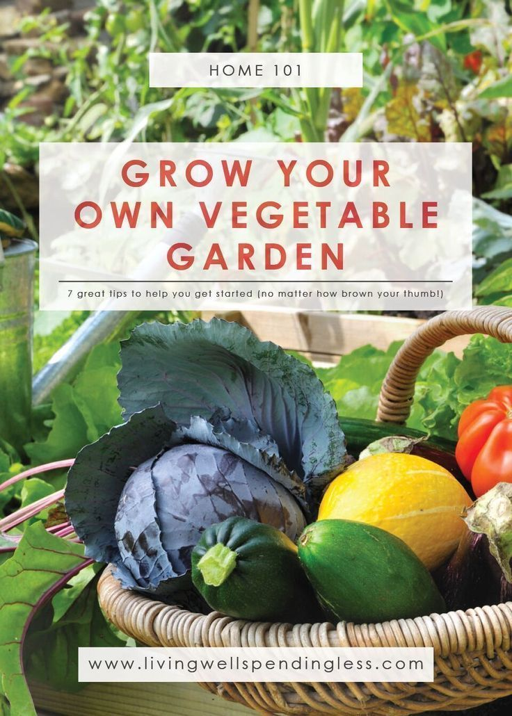 Comment Faire Pousser Un Jardin Potager Backyard Vegetable Gardens
