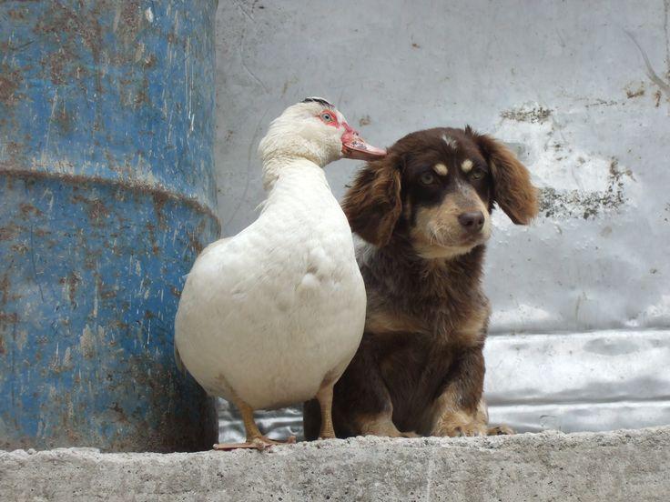 Friends in Aguas Calientes