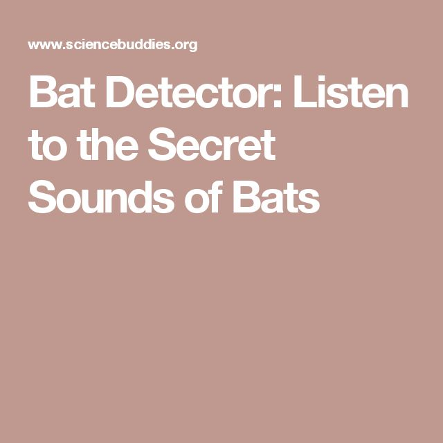 Bat Detector: Listen to the Secret Sounds of Bats
