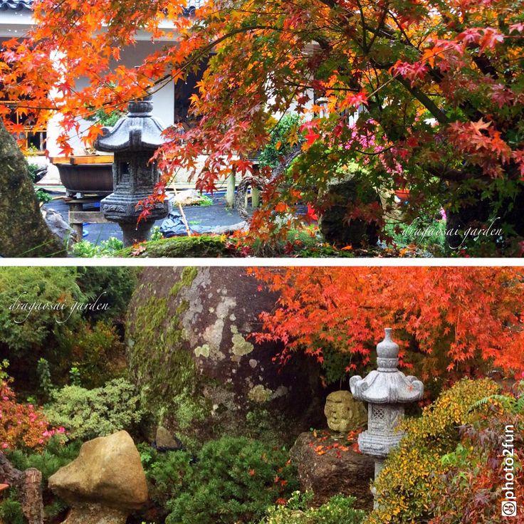 My Garden 12-2015