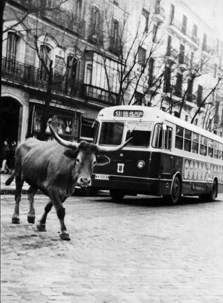 175 best images about madrid in the past on pinterest for Calle serrano 55