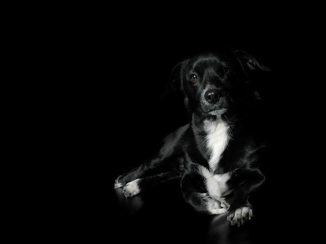 Full High Quality Hq Black Dogs Wallpapers And Pictures Hd Photos Black Dog Dog Wallpaper Wild Animal Wallpaper