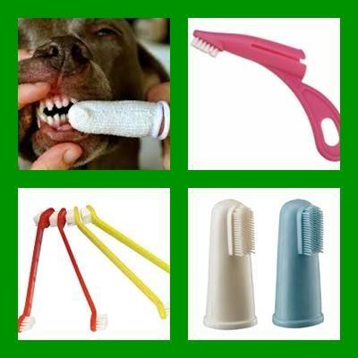 ¿Por qué y cómo cepillar los dientes de tu perro?