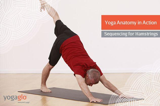 Beste Yoga Anatomie Online Ideen - Anatomie Von Menschlichen ...
