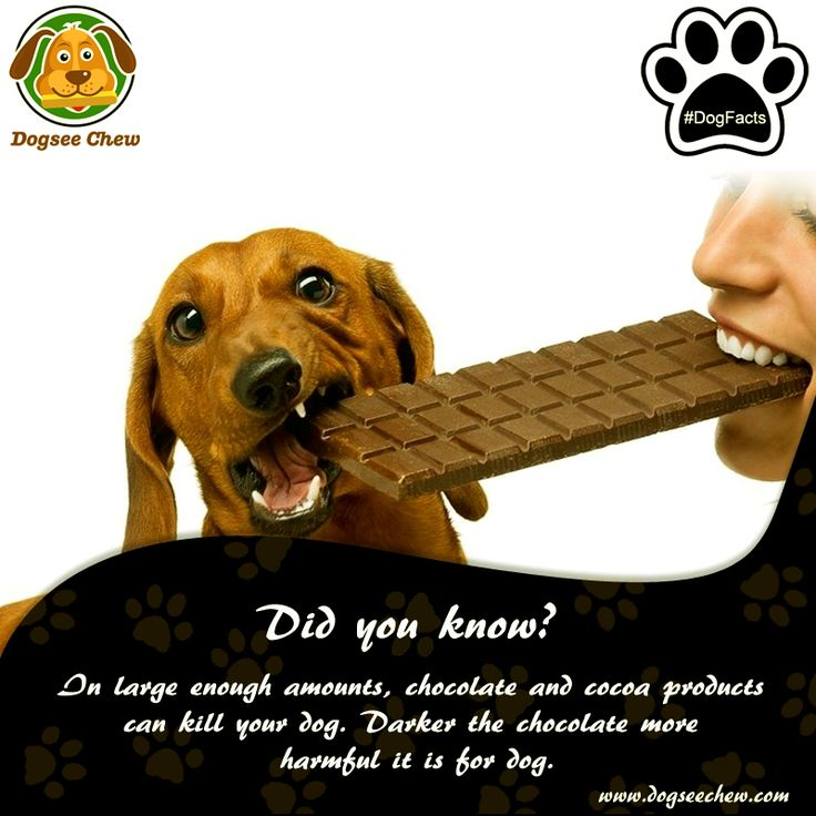 As much as you would want to but do not share your chocolates with your dog. Check out more such #DogFacts from #DogseeChew that every dog companion should know.