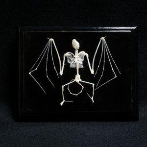 Articulated Skeleton