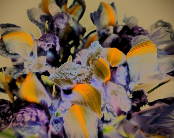 Abstracted iris