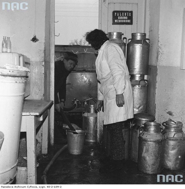 Pompowanie mleka z wiadra do cysterny.