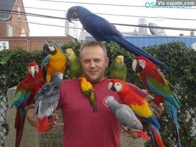 Raised Parrots
