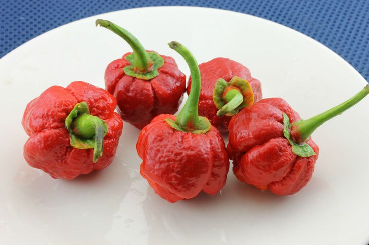7 Pod Bubblegum Chili - One Of The HOTTEST CHILLI PEPPER ( Capsicum Chinense) Extremely hot, World's Hottest Pepper