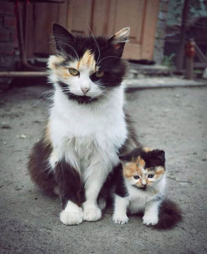 Look the same.adorable cats