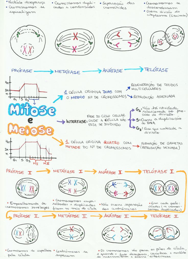 Confira uma mapa mental incrível sobre Mitose e Meiose, estude o assunto e prepare-se para o Enem e vestibulares!