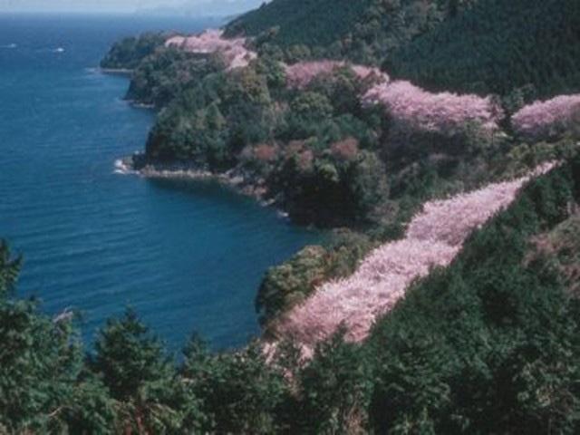 湯の児チェリーライン(熊本県水俣市)