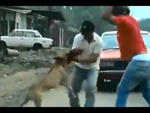 PITBULL ATACA A HOMBRE - PITBULL ATTACKS