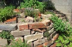 Afbeeldingsresultaat voor inheemse tuin groningen