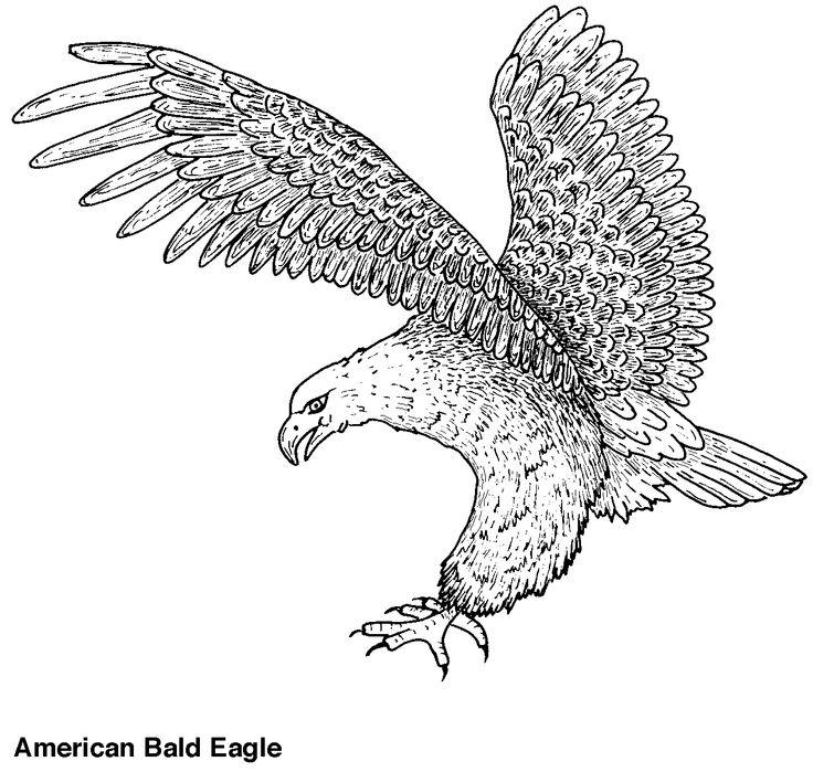 eagle guila arpaguila calvapatrones de filigranaspginas para colorear