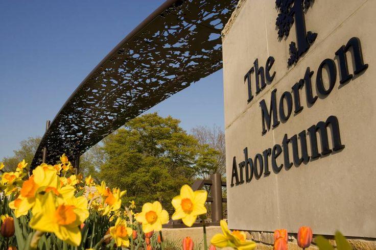 The Morton Arboretum: My favorite place to go