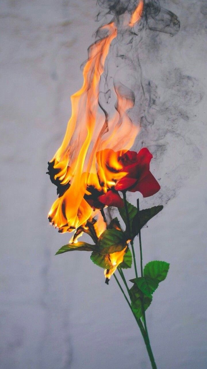 Rose Fire Tumblr Grunge Aesthetic Wallpapers Art Photography