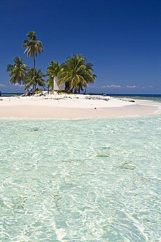 Palm trees on beach, Silk Caye, Belize, Central America