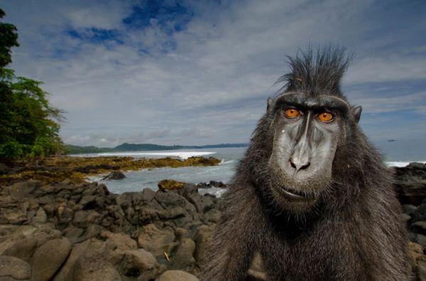 Foto hecha por Steve Winter. En el primer tercio vemos una parte de la naturaleza, mientras que en tercer tercio situamos al mono.
