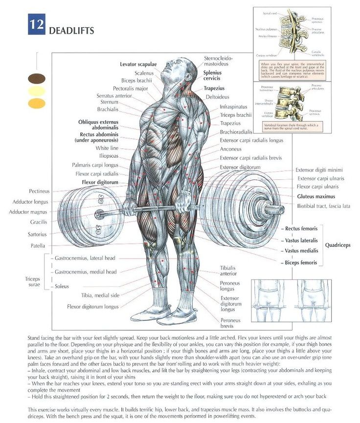 Step By Step Finding Indispensable Issues For Strength Training: Anatomy, Workout